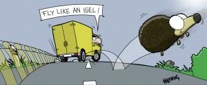 rk-fly-igel